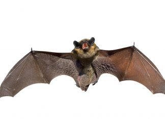 Image of a bat on a white background
