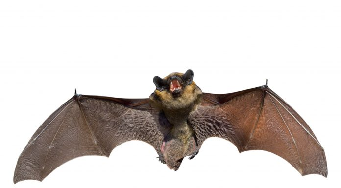 How to get rid of bats - Home Guide Expert