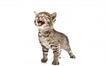Image of a cat on a white background