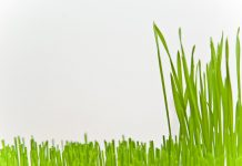 How Often Should you Cut Your Grass - Home Guide Expert