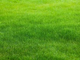 Home Guide Expert - How to make your lawn greener - Canstock Image