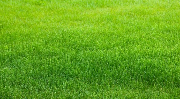 How to make your lawn greener - Home Guide Expert