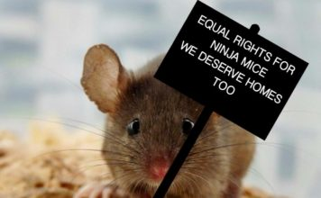 How to get rid of mice - Home Guide Expert