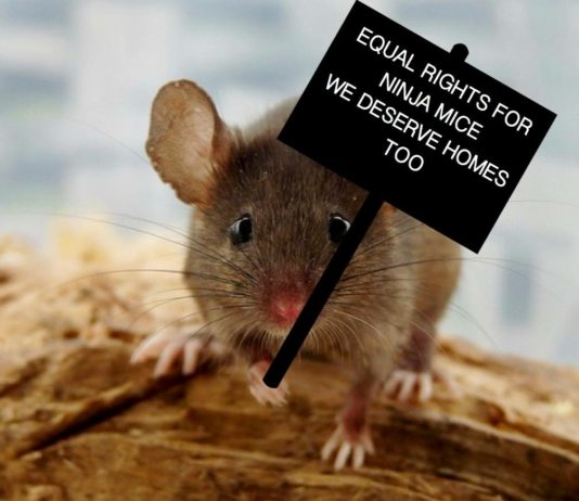 Image of a mouse with a board.