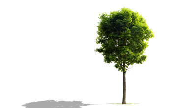 What is tree Subsidence - Home Guide Expert