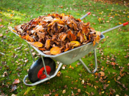 How to deal with Fallen Leaves - Home Guide Expert