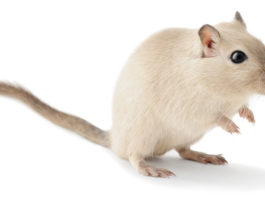 How to get rid of Gerbil Smells - Home Guide Expert