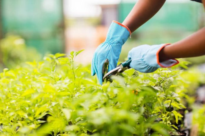 How to find a good gardener - Home Guide Expert