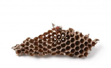 Image of a wasp nest on a white background