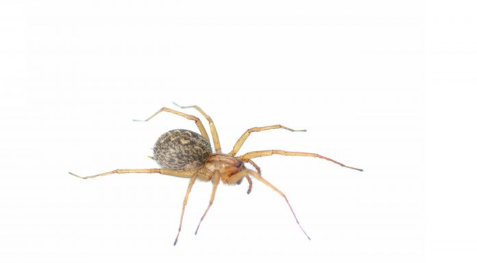 How to get rid of spiders - Home Guide Expert