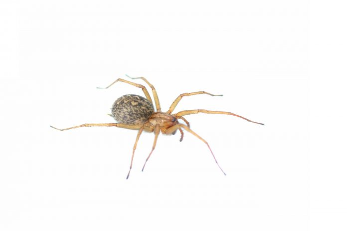Image of a spider on a white background