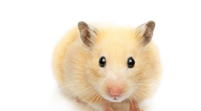 How to get rid of hamster smells - Home Guide Expert